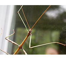 Walking Stick Photographic Print