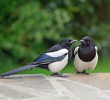 Mr & Mrs Magpie by pskuce
