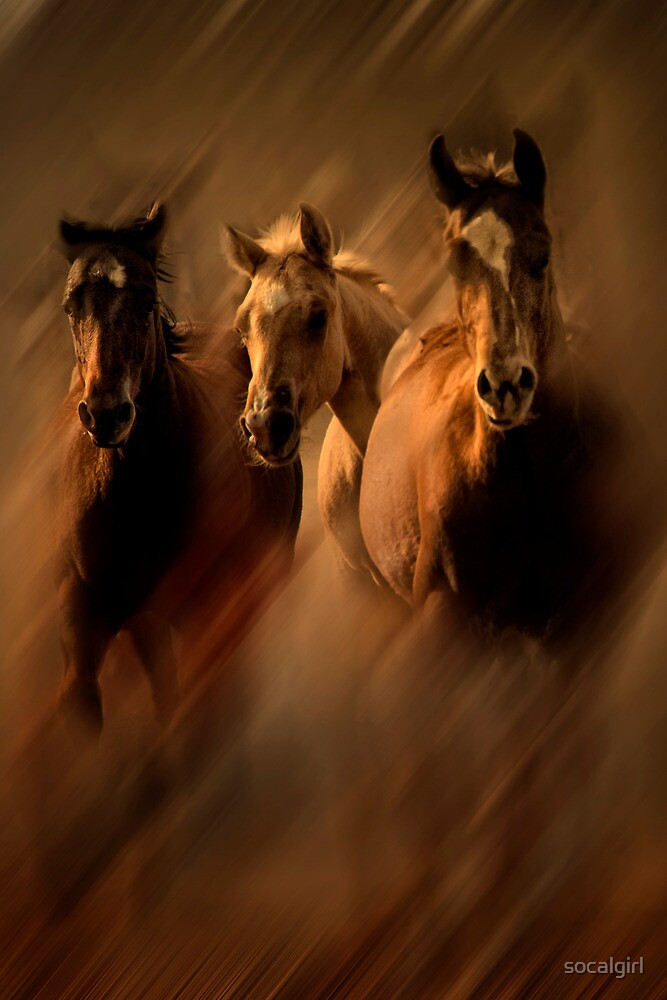 Running colts by socalgirl