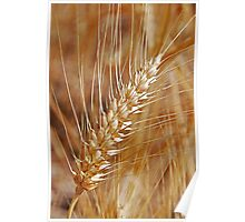 Wheat Poster