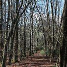 Walking Track at Emerald Lake by Aleksander