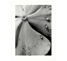 Flower Zen Art Print