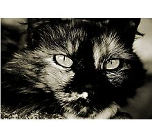THE TORTOISESHELL CAT Photographic Print