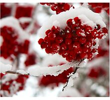 Frozen Red by Karen Aab