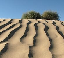 Dune Shrubs by David Kocherhans