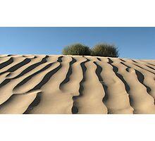 Dune Shrubs Photographic Print