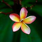 Tropical by MeganPreece