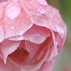 Crabapple Blossom by David Kocherhans