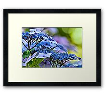 Lace Cap Framed Print