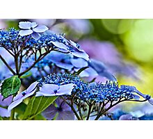 Lace Cap Photographic Print