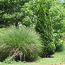 Mature Garden Grasses and Evergreens by JeffeeArt4u