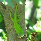 Bright Green Anolis Carolinensis Lizard by JeffeeArt4u