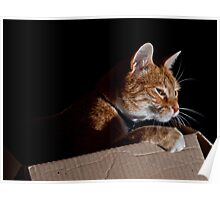 Cat In a Box Poster