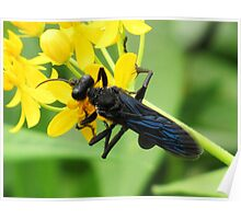 Black Wasp Poster