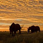 Golden Sunrise - Camooweal NW Qld by Carmel Williams