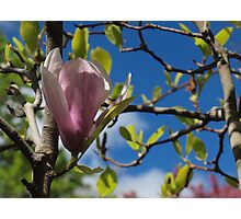 The Promise of Spring Photographic Print