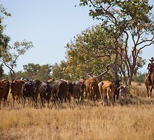 Horseman with cattle at Camooweal 2 by Carmel Williams
