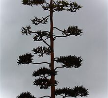 Avalon Beach Tree by Deb Gibbons