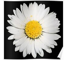 Top View of a White Daisy Isolated on Black Poster