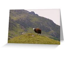 The Lake District: The Lonely Sheep Greeting Card