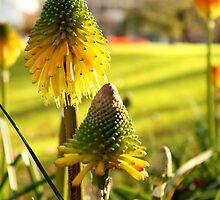 Strange flower by grace1993
