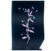 A curious herbal Elisabeth Blackwell John Norse Samuel Harding 1737 0120 Heart's Ease Pansies Inverted Poster