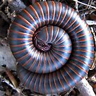 Millipede by Rusty Katchmer