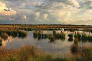 Wetland Fochtelooerveen by Jo Nijenhuis