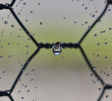 The Center Of A Spider Web by MissyD