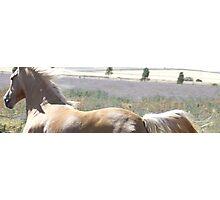 Pale horse Photographic Print