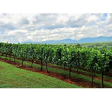 Blackstock winery Photographic Print