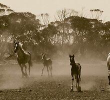 Herd of dust.. by kurrawinya