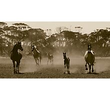 Herd of dust.. Photographic Print