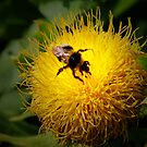 BUSY BEE by leonie7