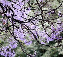 Jacaranda Portugal by Dee2west