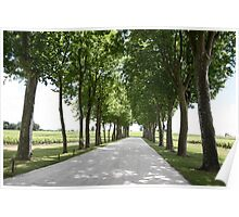 Road of Trees in Bordeaux Poster