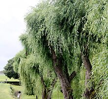 Weeping Willows of Le Verdon by Dee2west