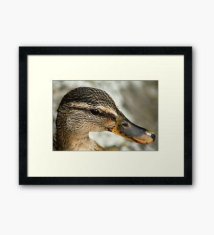 Duck? Framed Print