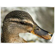 Duck? Poster