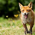 The Foxtrot by Peter Denness