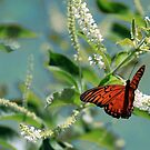 Monarch on Almond Blossoms by Linda Woods