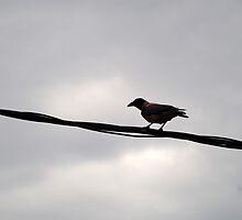 The Black Wire by Mezei József Tibor