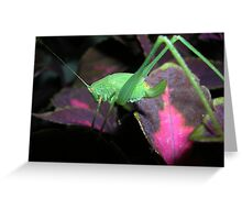 Baby orthoptera Greeting Card