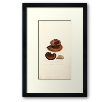 Coloured figures of English fungi or mushrooms James Sowerby 1809 1057 Framed Print