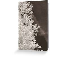 Untitled Infrared Greeting Card