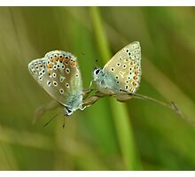Two Blues Photographic Print