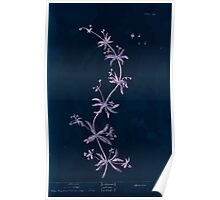 A curious herbal Elisabeth Blackwell John Norse Samuel Harding 1737 0108 Clivers or Goose Grass Inverted Poster