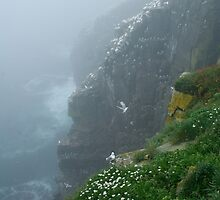 Cape St. Mary's in the Mist by Stephen Stephen
