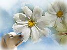 ~ Take Time to Smell the Flowers ~ by Brenda Boisvert
