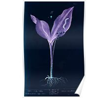A curious herbal Elisabeth Blackwell John Norse Samuel Harding 1737 0182 Lilly of the Valley Inverted Poster